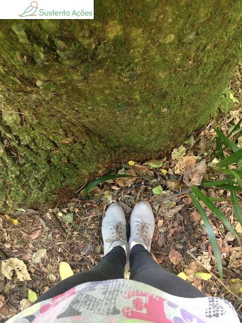 Encontro com uma árvore
