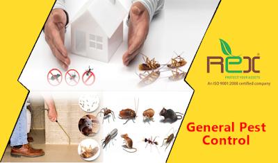 شركة مكافحة حشرات بالطائف مع عروضات وخصومات في فصل الصيف