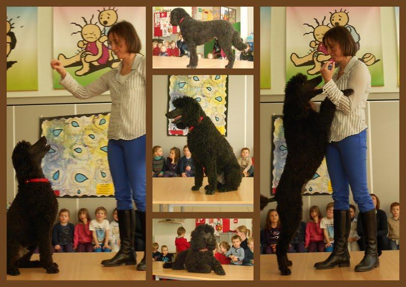 Kleurplaten Circushond.Kleuterafdeling Kallo Februari 2013