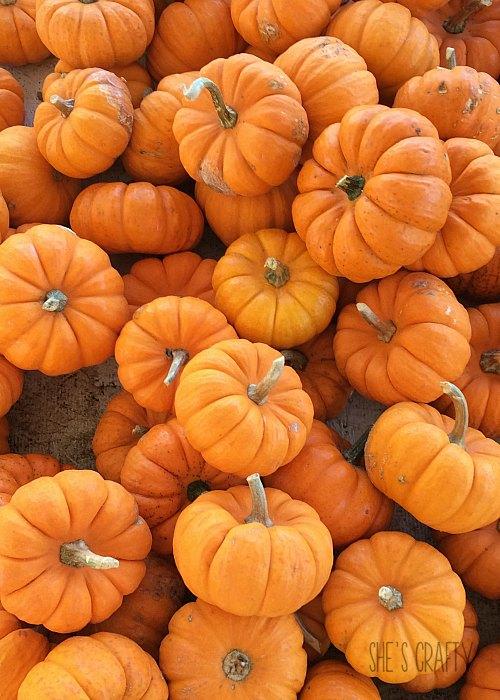 pumpkins, fall, orange, fresh pumpkins, mini pumpkins