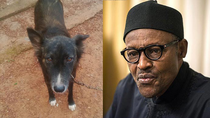 """Igbo trader in Ogun State arrested, charged to court for naming his dog """"Buhari"""""""