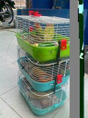 Cara Isolasi dan Karantina Burung Baru