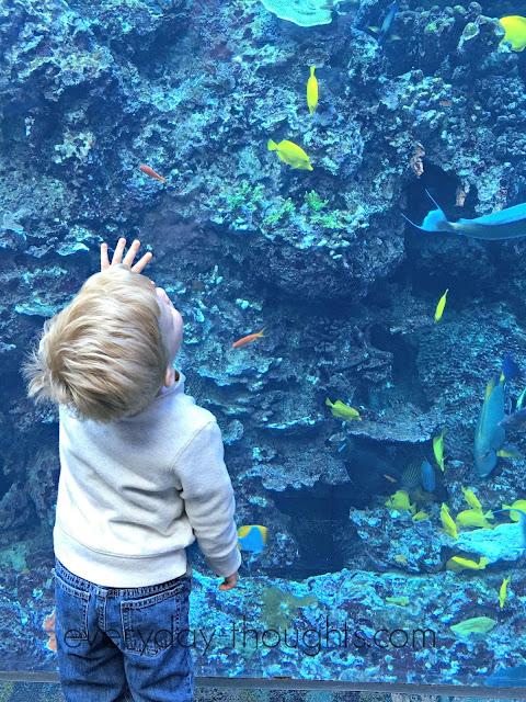 Georgia Aquarium Kid and Fish