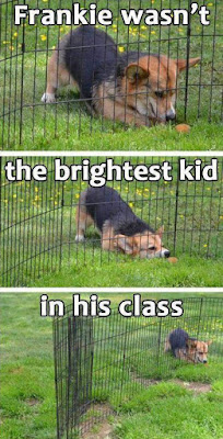 Funny Dog Humor : Not the brightest kids in the class #doghumor