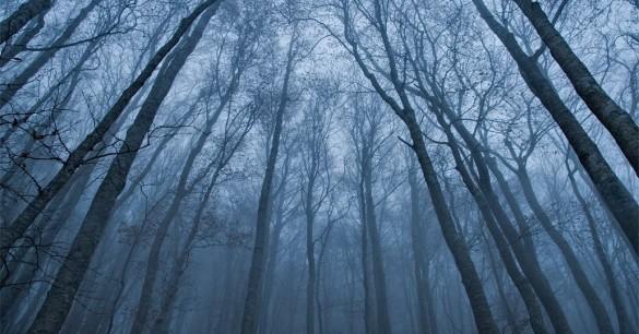 Το «καταραμένο» δάσος της Τρανσυλβανίας