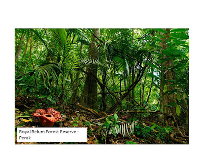 Welcome to Borneo! We're here to help you plan your trip that is tailor made to you...
