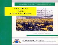 cultivo-del-crisantemo
