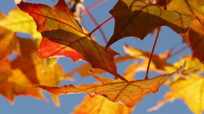 Wallpaper: The Leaves of Autumn