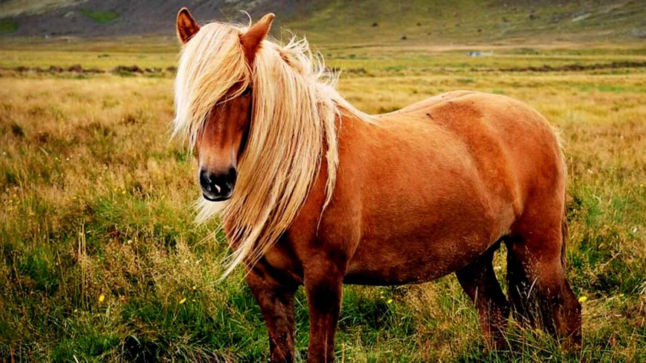 Q Horse Names Animals Names That Sta...