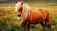 Pony horse pictures hd_Equus ferus caballus