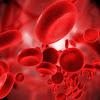 Fungsi dan Macam-Macam Sel Darah
