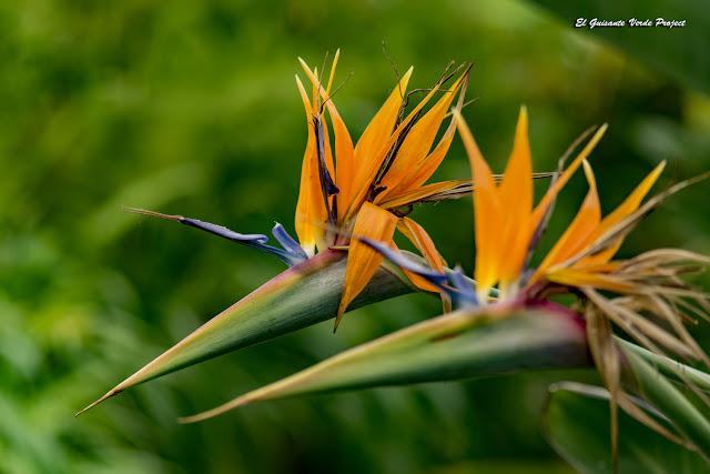 Flor Ave del Paraíso de la Bambouseraie en Cévennes, Francia por El Guisante Verde Project