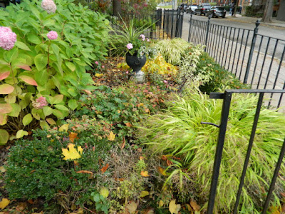 Cabbagetown Toronto front garden makeover before Paul Jung Gardening Services