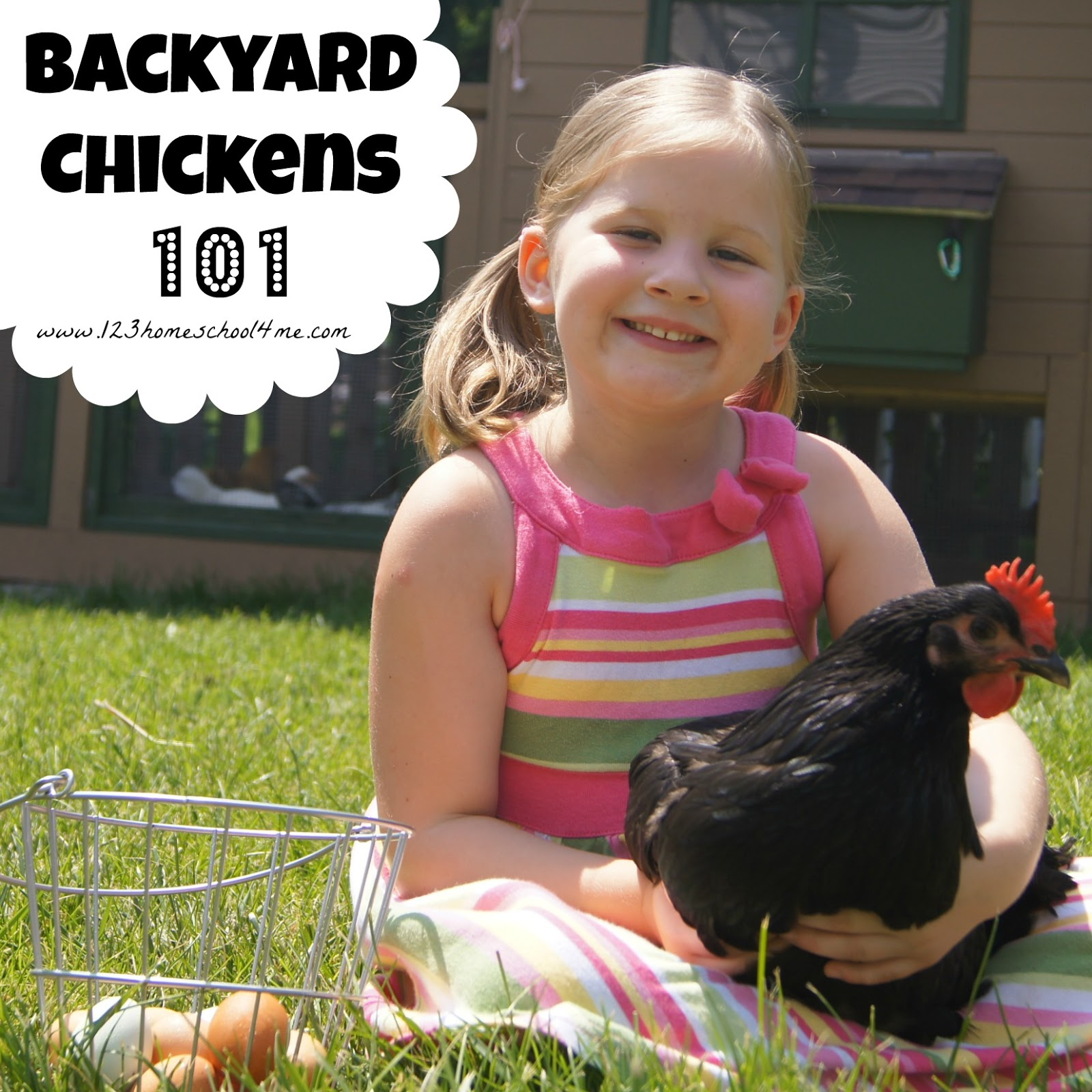 Backyard Chickens 101 Chicks Growing Up Fast