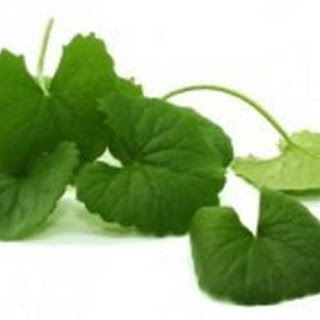 Gotu Kola is one of the natural remedies for peyronie disease pictures