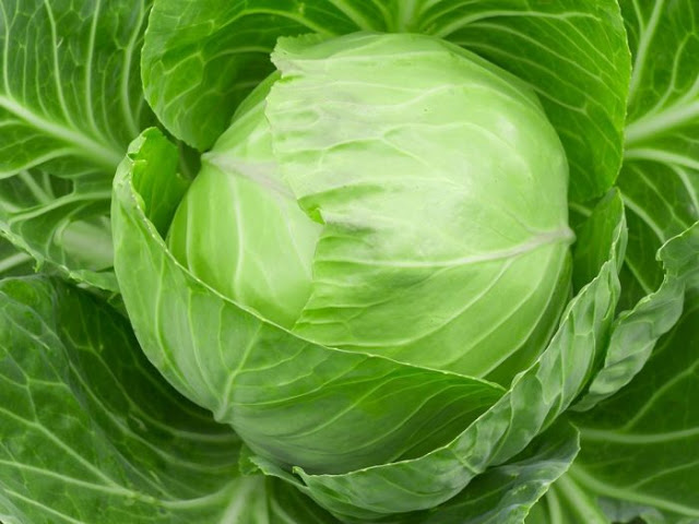 raw cabbage,reduce fat,weight loss tips