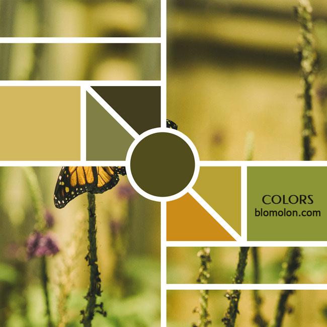 variedad_en_color_moodboards_12