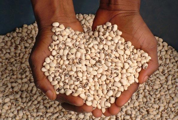 Monter son projet agricole au Cameroun