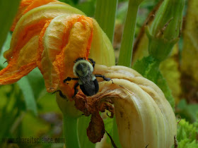 bee pollination citizen science