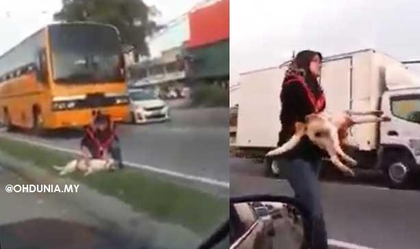 Wanita Bertudung Selamatkan Anjing Dilanggar Kenderaan (Video)