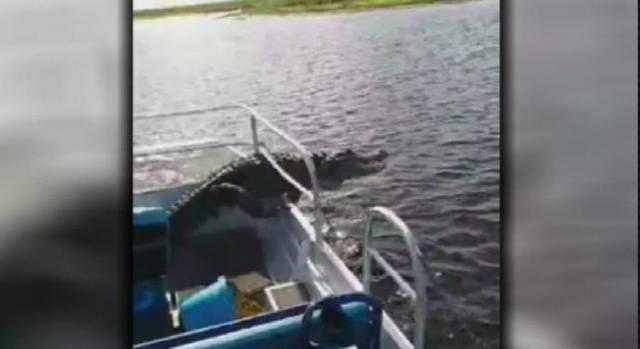 Video en vivo de cocodrilo que saltó dentro de un bote