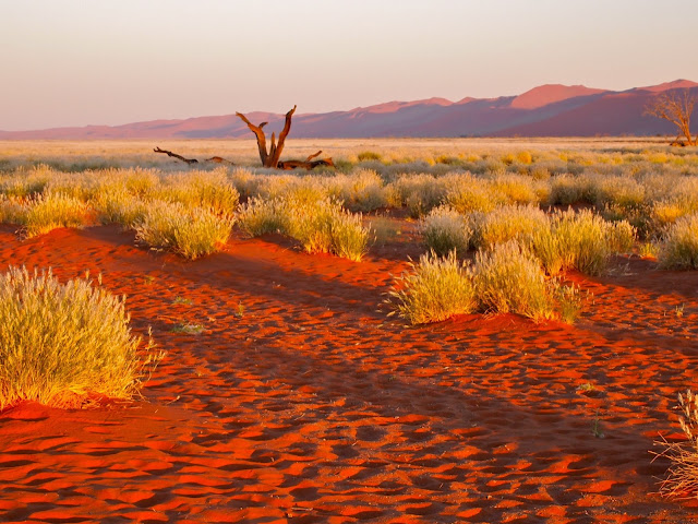 Deserto del Kalahari