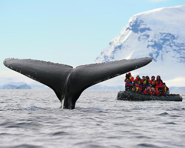 Φοβερή σκηνή: Φάλαινα χτυπά φουσκωτό με την ουρά της (βίντεο)