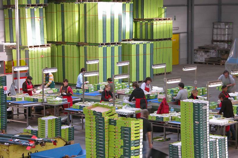 Sinh viên Đại học Khoa học Ứng dụng Fontys thực tập tại Công ty Logistics