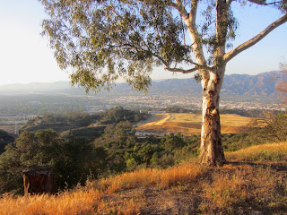 View northwest from Vista Del Valle Drive in Griffith Park toward Toyon landfill restoration project with Burbank in the background