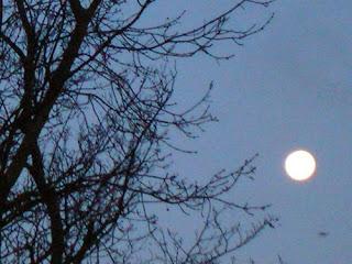 Lirik Lagu Padang Bulan [Sholawat Habib Syech]