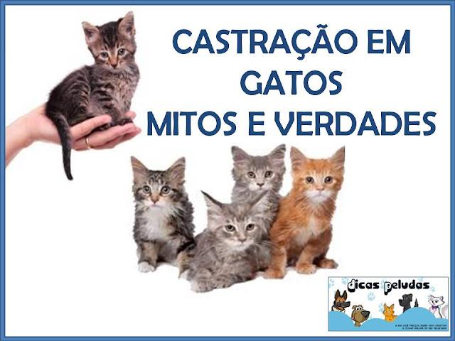 GATOS+CASTRA%C3%87%C3%83O.jpg