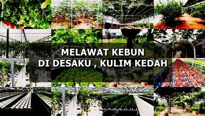 Melawat Kawasan Pertanian di Desaku, Kulim, Kedah