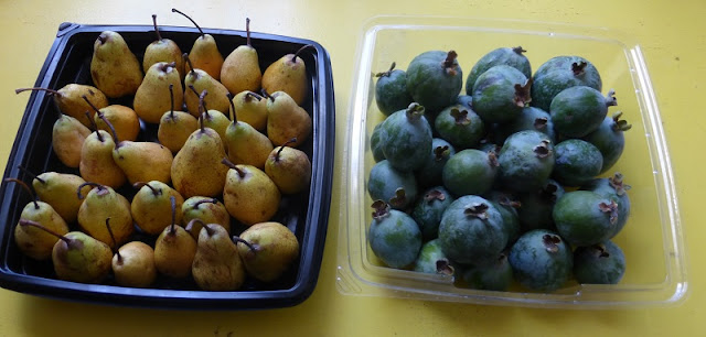 pears and pineapple guavas