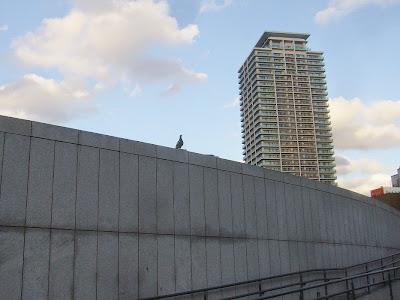 中之島公園の鳩(右のビルはヴィークタワー大阪・・・)