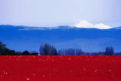 Россия флаг в виде природы