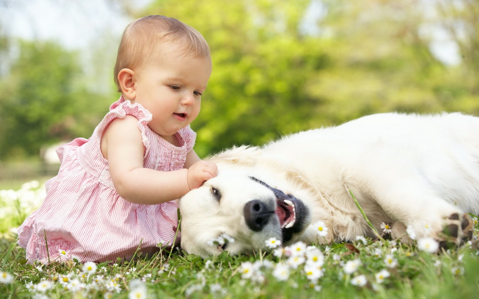 The Ways That Make your Baby and Pets Best Friend of Each Other