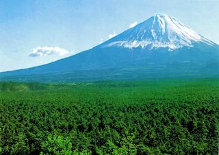 Photo de la forêt d'Aokigahara au pied du mont Fuji
