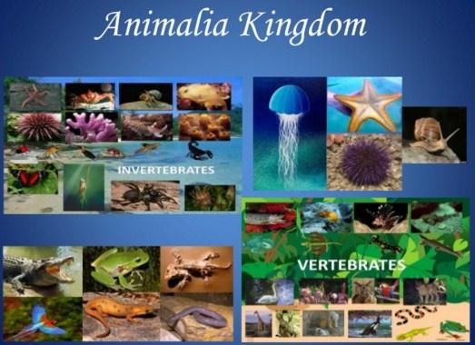 Kingdom Animalia : Avertebrata dan Vertebrata