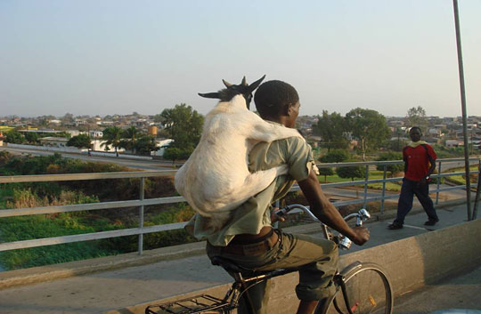 goat motorcycle