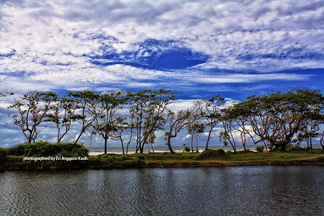 Deretan pohon Ketapang (Terminalia catapa) di tepi pantai Bubujung.