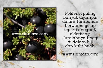 polifenol dalam anggur elderberry