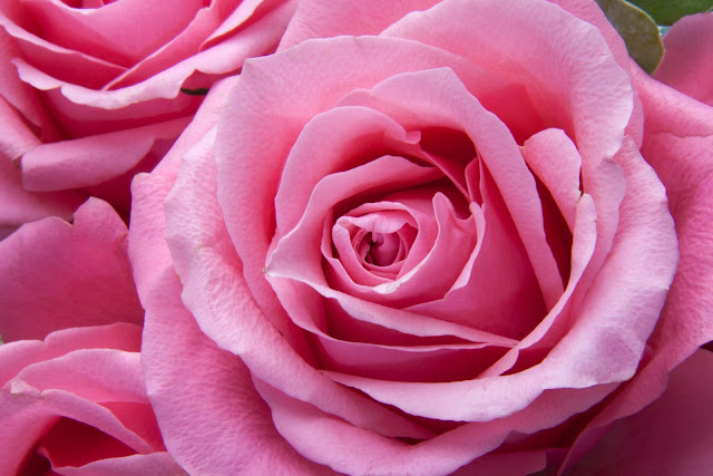 Creative Pink Rose  Hd Wallpaper