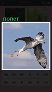 птица на лету ловит мячик, размахивая крыльями