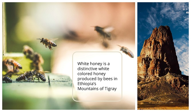 White honey of Ethiopia Mountains of Tigray