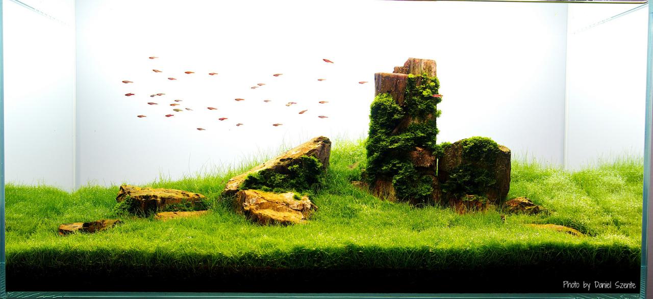 Bể thủy sinh thảm cỏ dùng đá gỗ hóa thạch