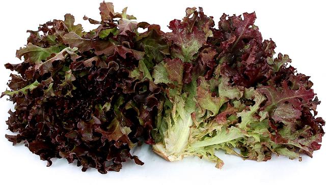 Дуболистный салат