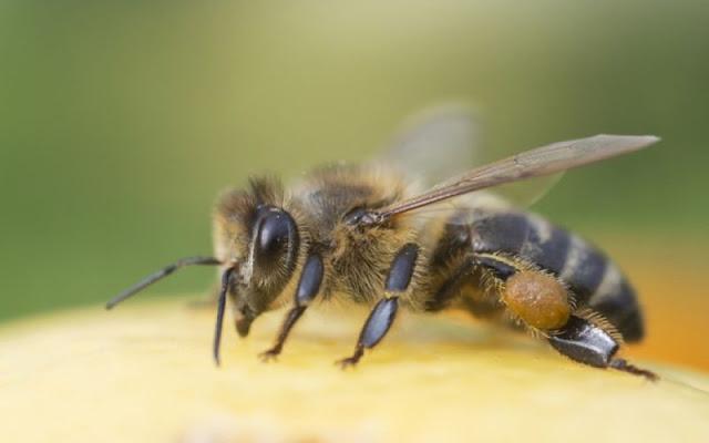 Αγρότης στην Αργολίδα έχασε τη ζωή του από τσίμπημα μέλισσας