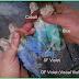 VIOLET FACTOR PADA LOVEBIRD