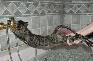 Kucing Kampung Susah dimandikan