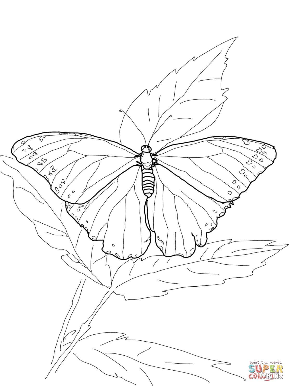 colorear dibujos de mariposas